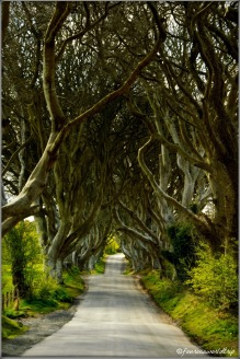 The Dark Hedges / The Kings Road