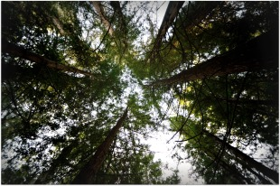 high-trees
